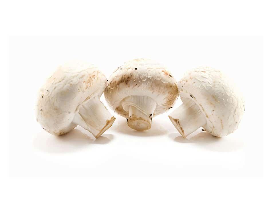 Mushroom Punnet 1